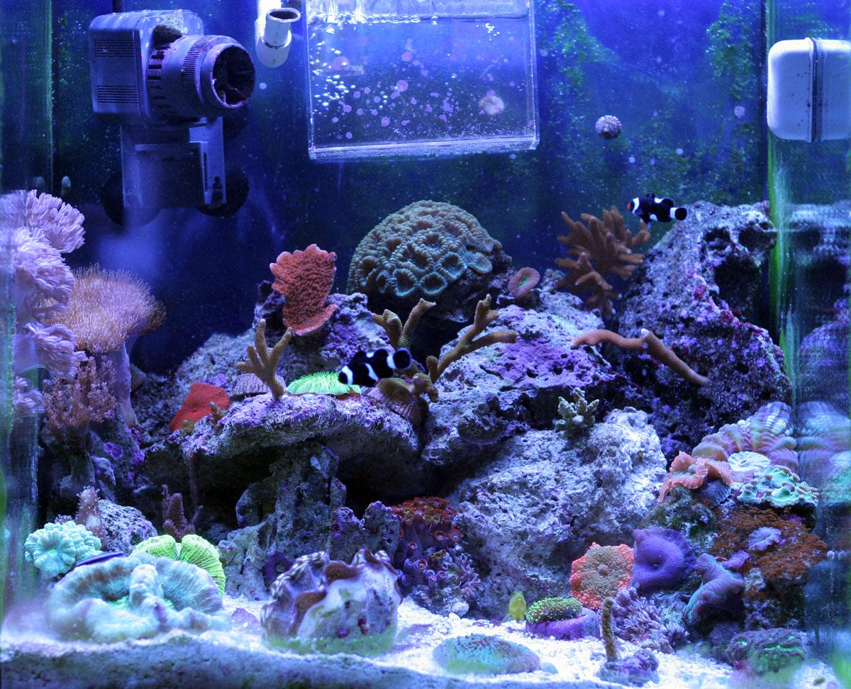 30 gallon saltwater aquarium tyler merrick for Saltwater fish for 10 gallon tank