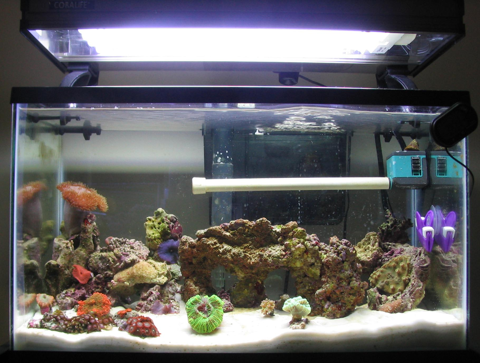 saltwater fish tank 10 gallon 10g reef saltwater