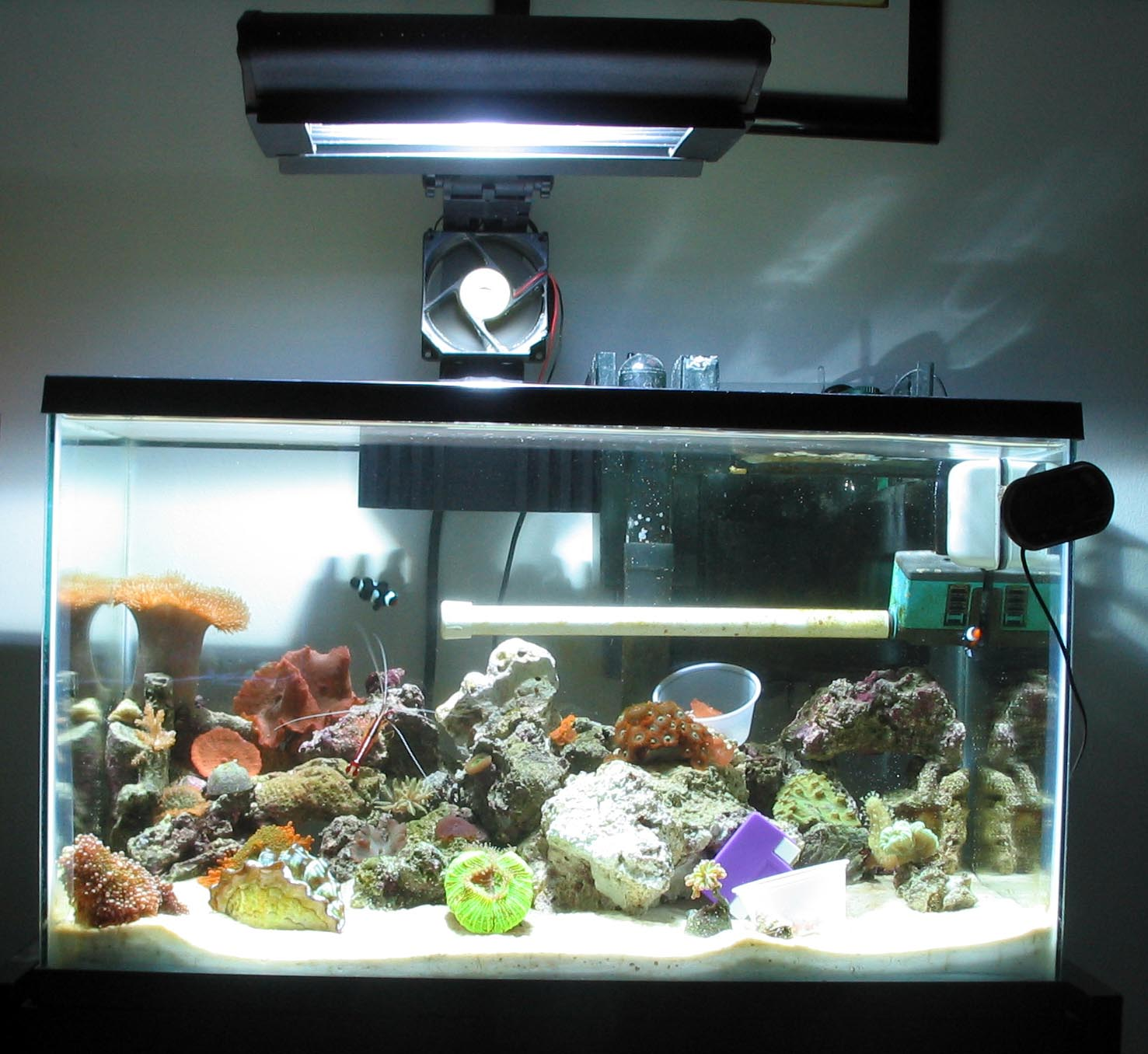 Pics for 10 gallon saltwater fish tank for Fish for a 10 gallon tank