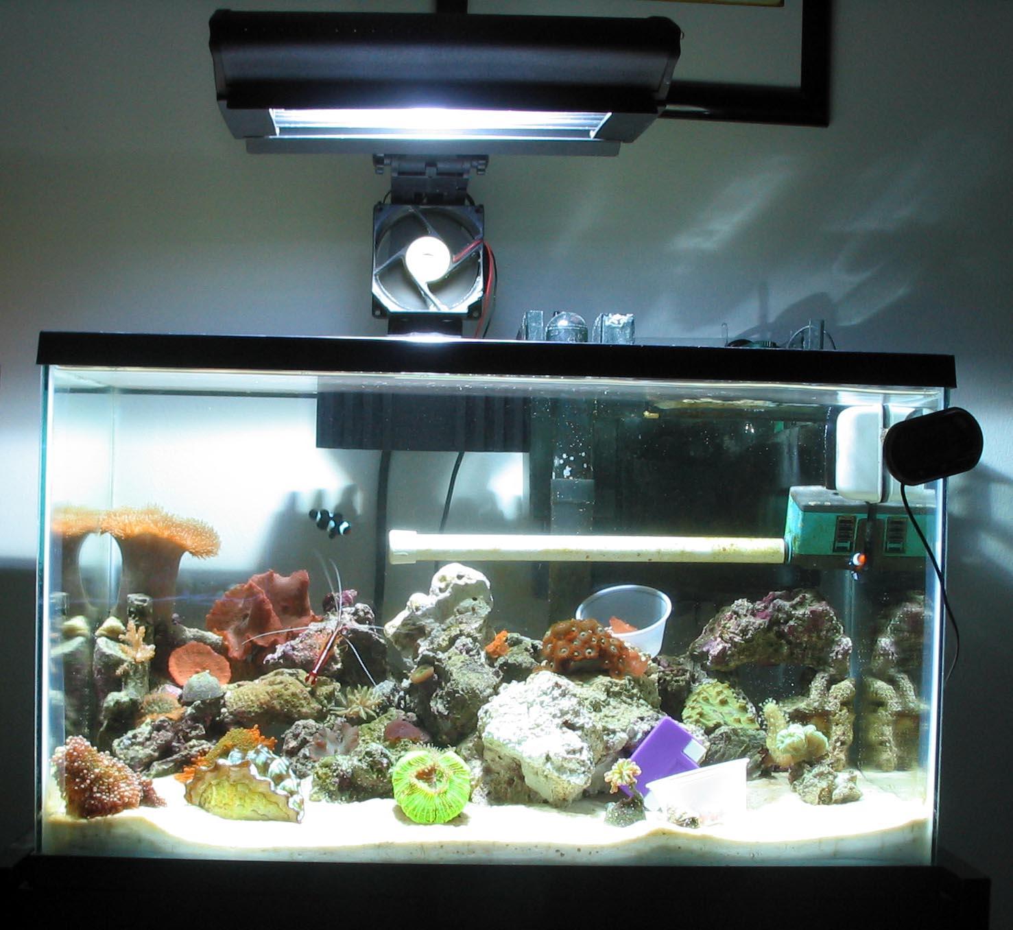 How do i start a 10 gallon salt water aquarium