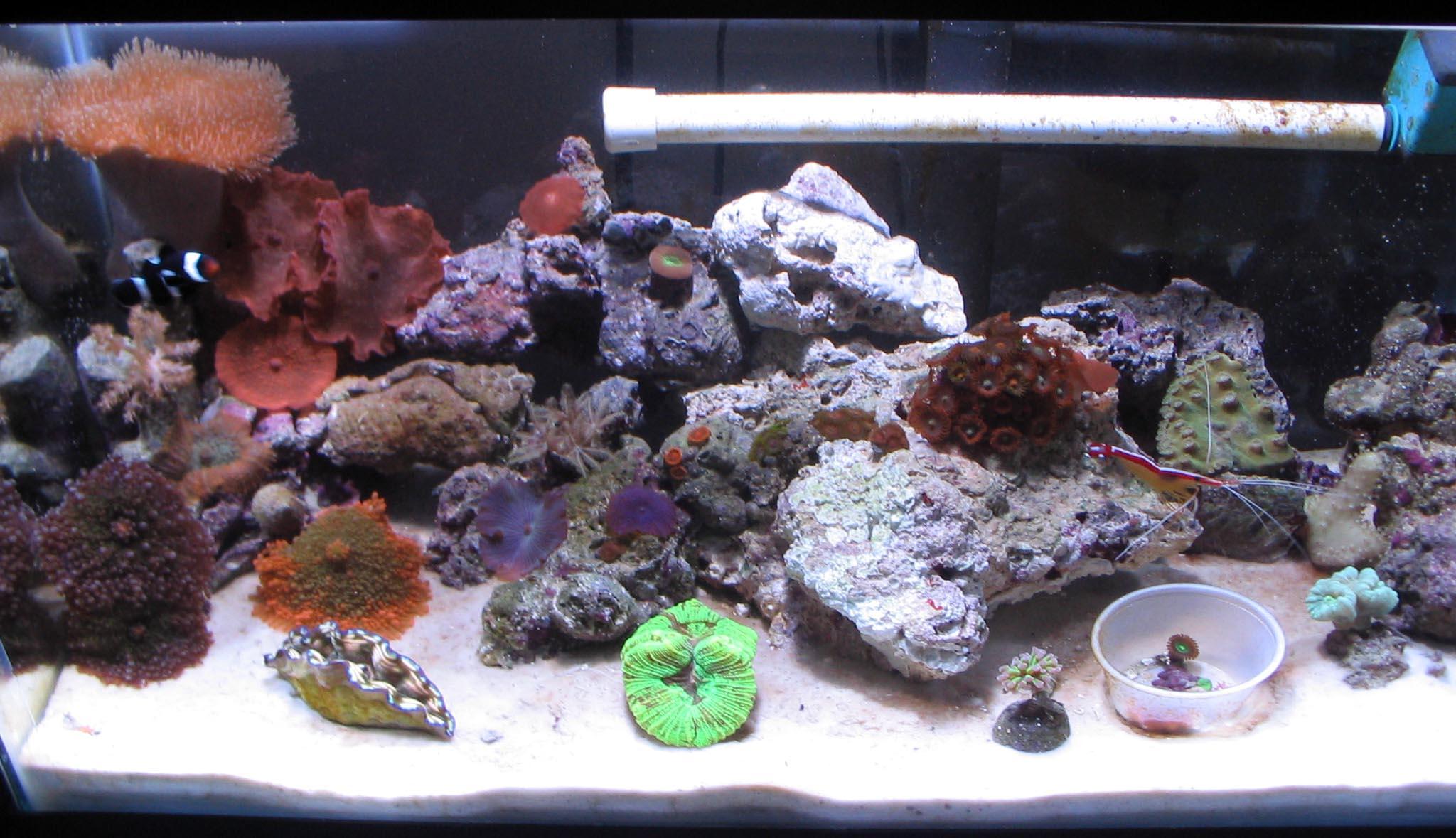 saltwater fish tank 10g - 10g Reef Saltwater Aquarium 2017 - Fish Tank ...