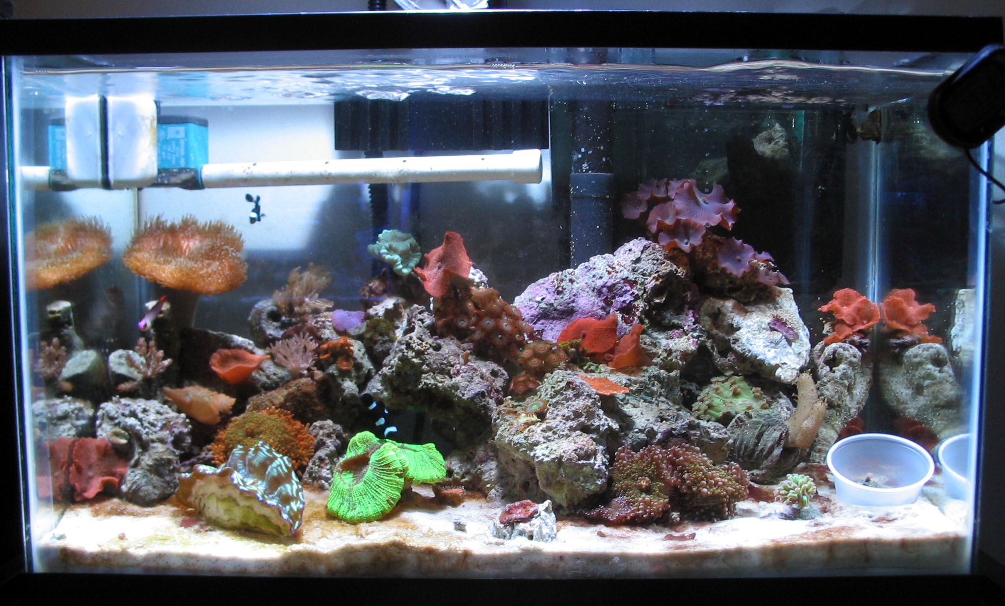 saltwater fish tank 10g 10g reef saltwater aquarium 2017