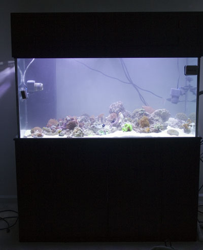 120g Tank, Canopy and Stand