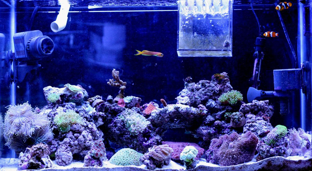 29 Gallon Saltwater Reef Tank