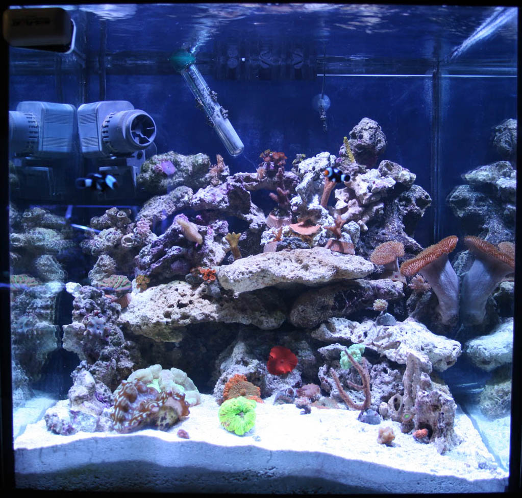 Saltwater fish tank 30 gallon 30 gallon saltwater Thirty gallon fish tank