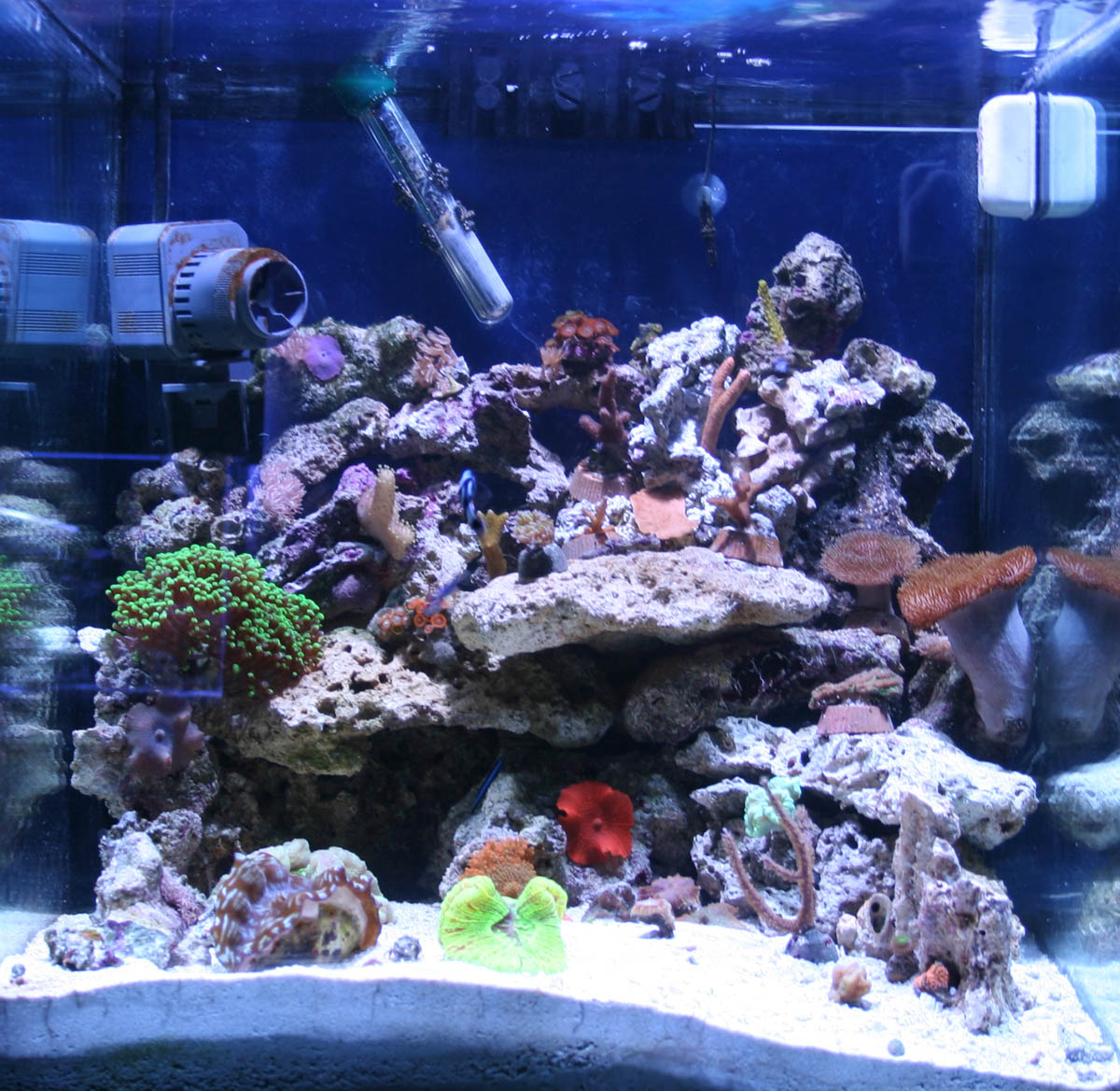 Saltwater aquarium 30 gal 30 gallon saltwater aquarium Thirty gallon fish tank