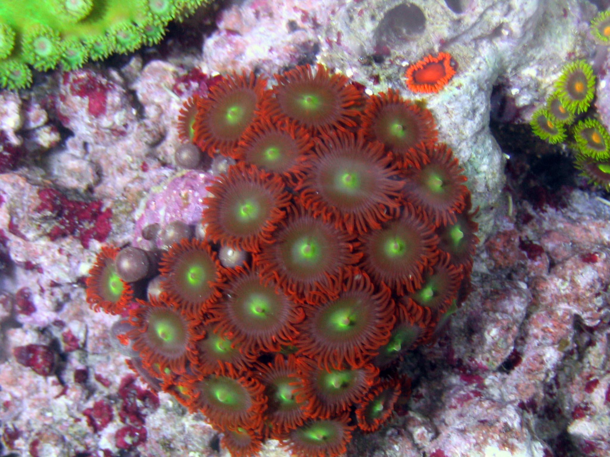 saltwater information polyp corals