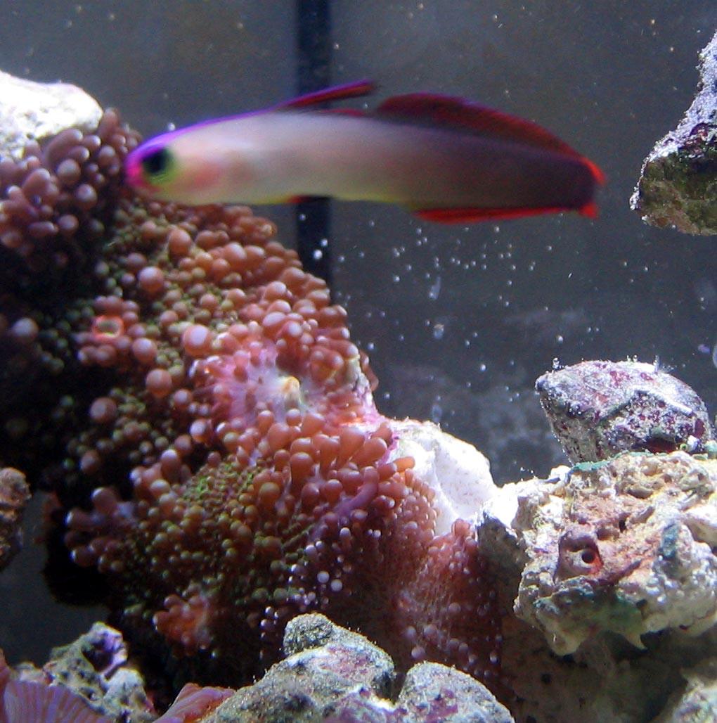 Saltwater fish tank maintenance minimum size 2017 fish for Marine aquarium fish